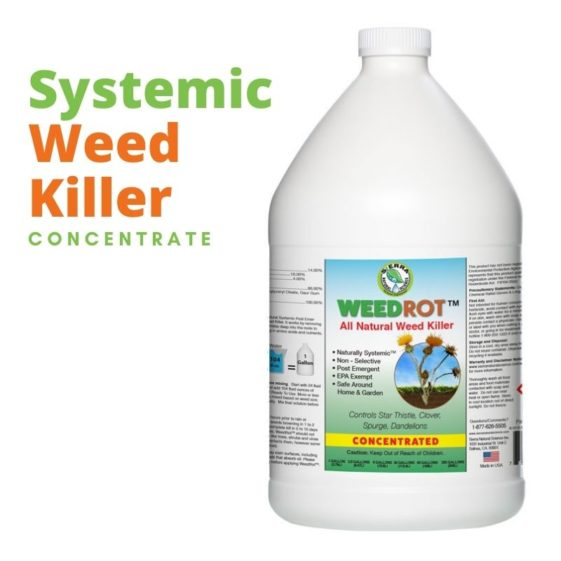 Sierra Natural Science SNS WeedRot All Natural Weed Killer Concentrated