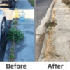 Before and after using Sierra Natural Science weed killer products