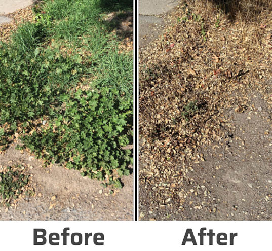 before and after weed killer by SNS