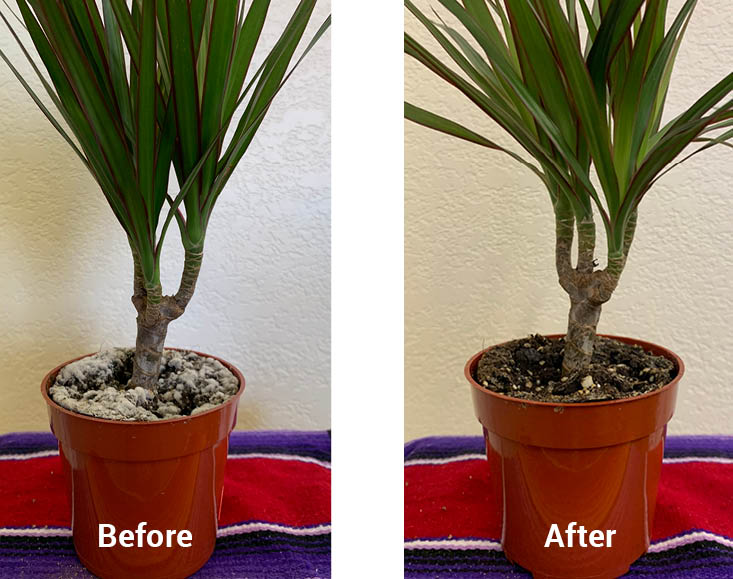 Photo of Before & After picture after using SNS Fungicides